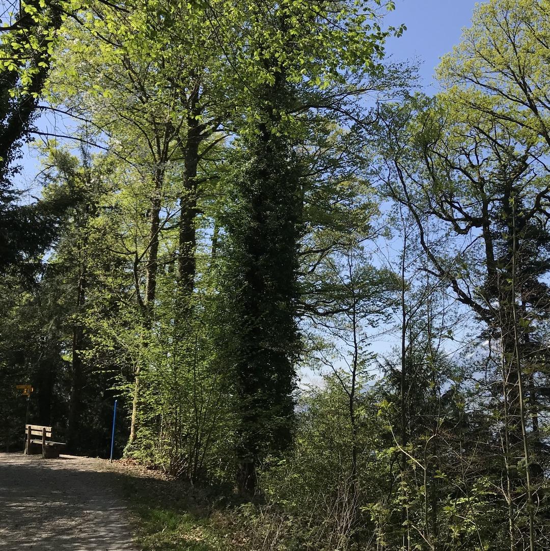 Sitzbank im Herrenwald