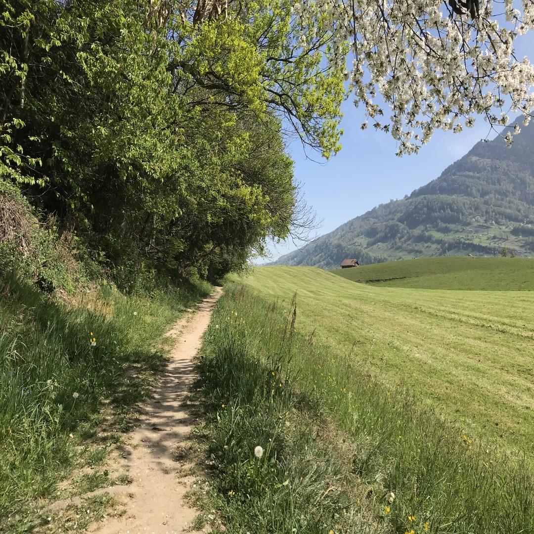 Weg im Herrenwald